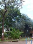 Gardens near University, New Town Lilongwe